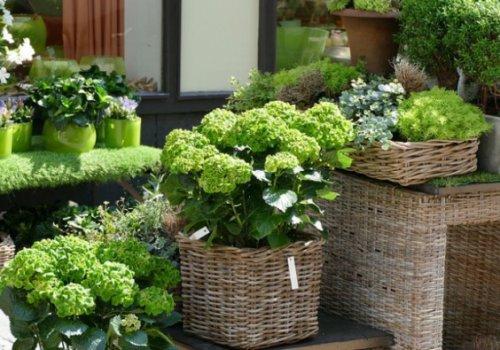 Bau- und Gartenmärkte sowie Blumenläden dürfen öffnen