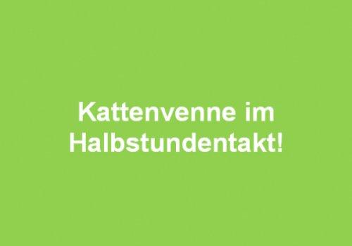 Kattenvenne im Halbstundentakt! Infoveranstaltung am 30.01.2019